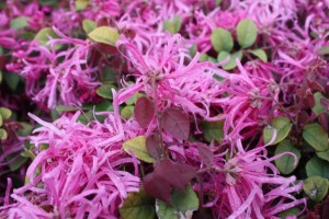 Purple-Flowers-1024x682